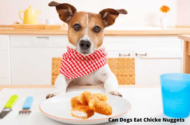 can dogs eat chicken nuggets dogs lover must know