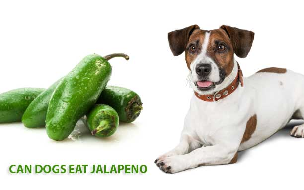 Can Dogs Eat Jalapeno