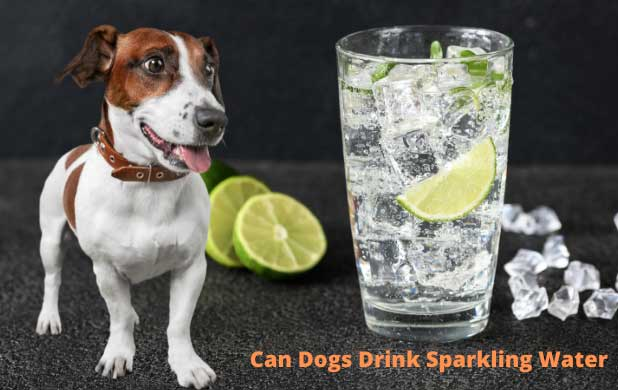 Can dogs drink sparkling water