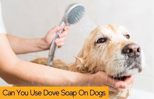 Can you use dove soap on dogs