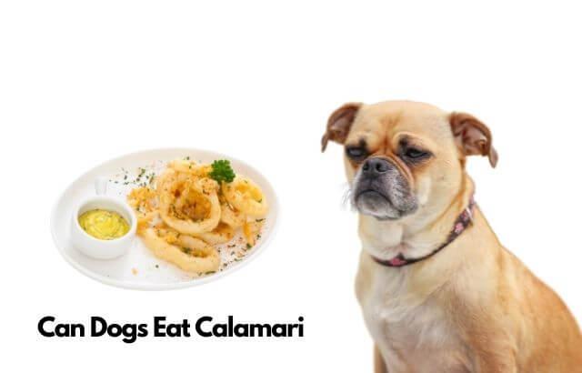 can dogs eat Calamari