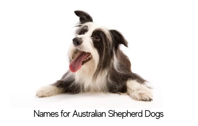 Names for Australian Shepherd Dogs